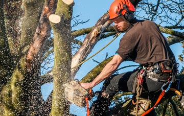 hire an expert tree surgeon due to dangers
