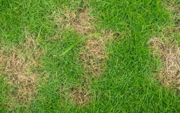 professional Wolverhampton lawn care