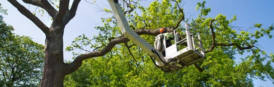 Wolverhampton tree surgery services