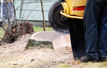 rated Wolverhampton tree stump removal companies