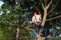 Wolverhampton tree crown reduction services