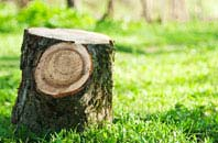Wolverhampton tree stump removal services